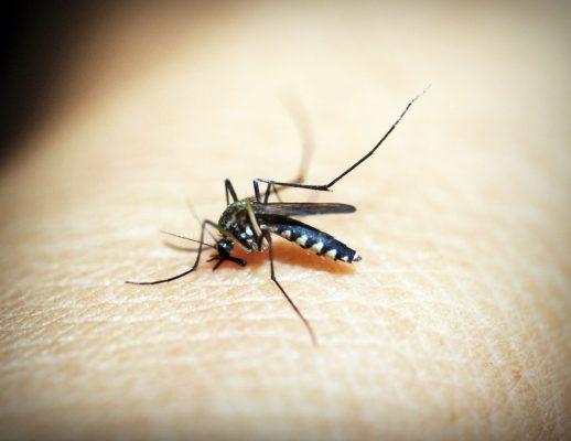 Muỗi tác nhân gây bệnh